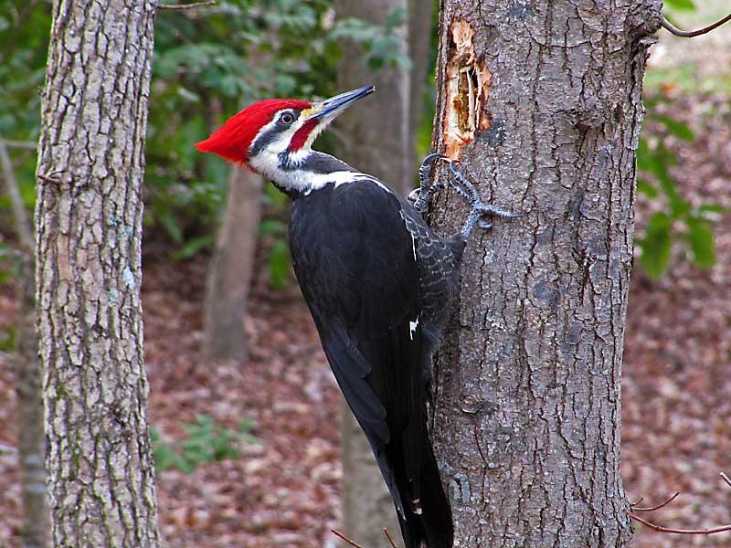 Woodpecker | Photos of Birds by - 89.0KB